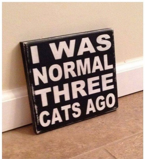 Sign saying I WAS NORMAL THREE CATS AGO