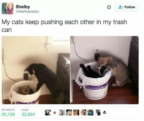 meme of cats that keep pushing each other into the trash can