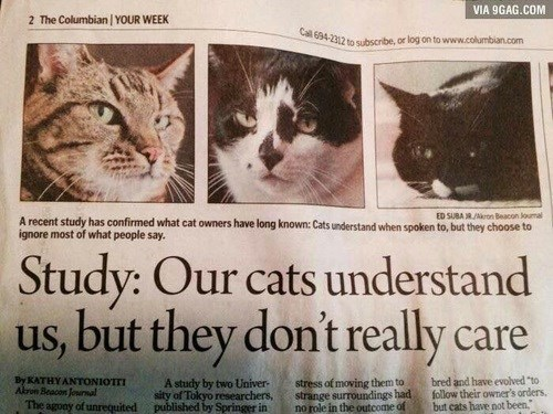 Newspaper article about how cats understand us, but don't really care.