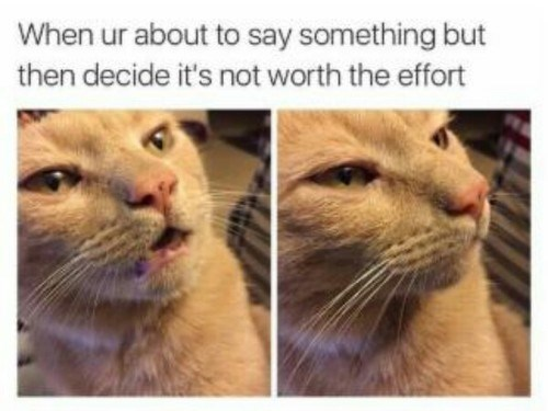second thoughts cat