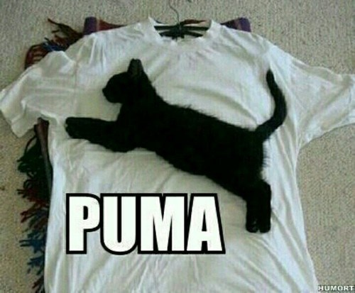 puma kitten on shirt meme