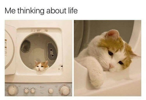 deep thoughts cats