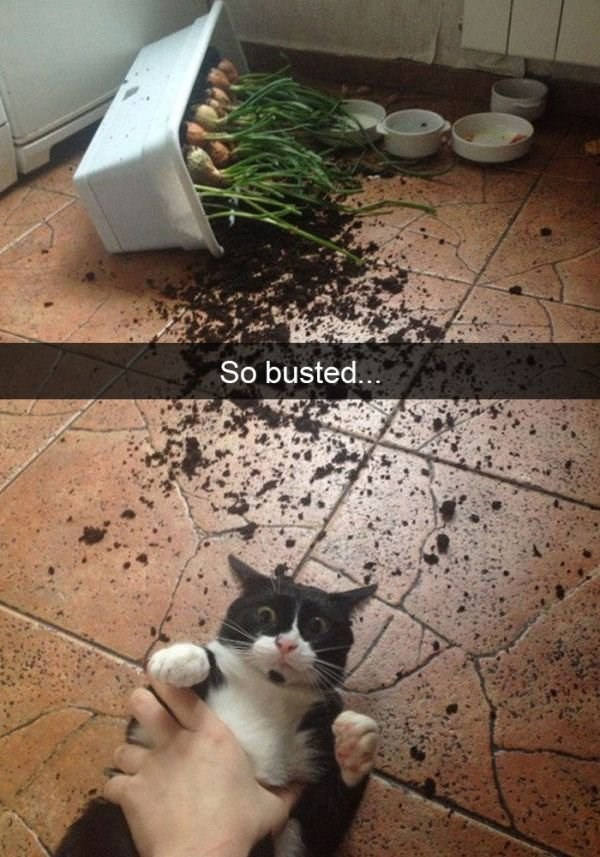 Cat - So busted...