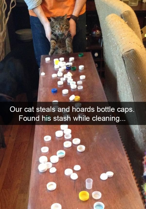 Games - Our cat steals and hoards bottle caps. Found his stash while cleaning...