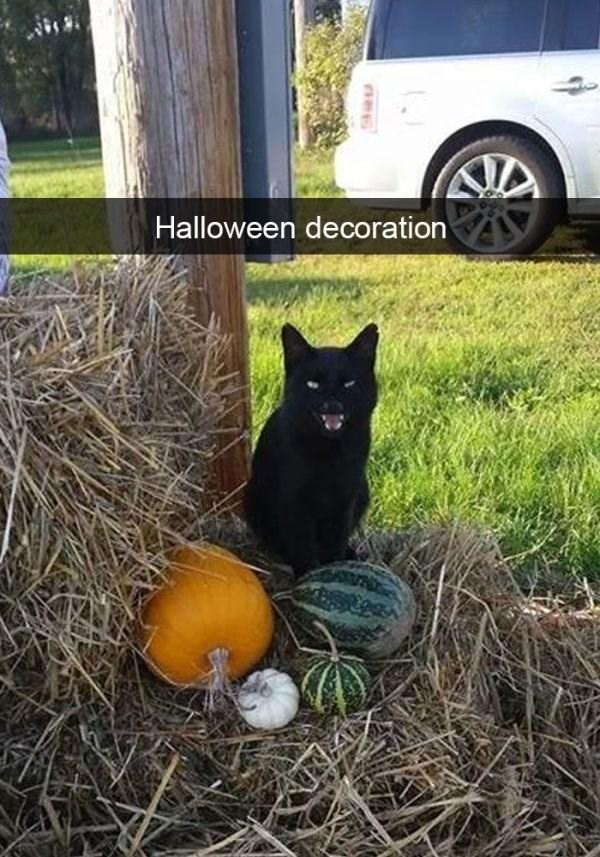 Cat - Halloween decoration