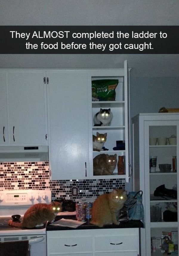 Property - They ALMOST completed the ladder to the food before they got caught. ( T