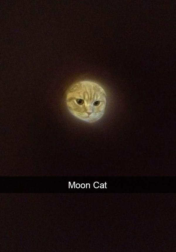 Cat - Moon Cat