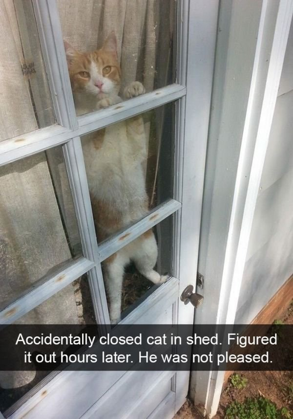 Cat - W Accidentally closed cat in shed. Figured it out hours later. He was not pleased.