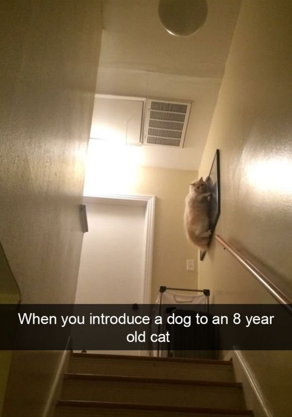 Ceiling - When you introduce a dog to an 8 year old cat