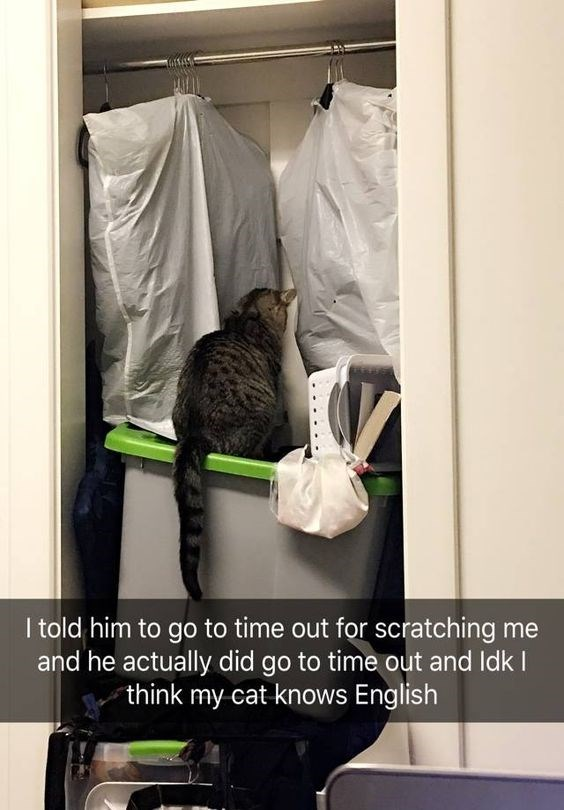 Cat - I told him to go to time out for scratching me and he actually did go to time out and Idk I think my cat knows English