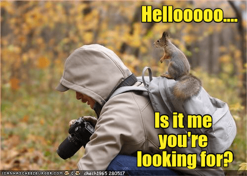 Funny squirrel meme in which the furry creature is hiding behind the photographer who is otherwise trying to take a picture of it.