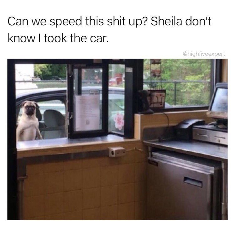 Funny meme of dog sitting at drive thru trying to get food.