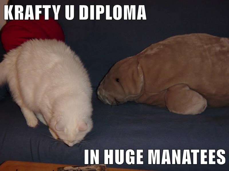 Funny cat meme about Krafty Diplomas and a plush toy manatee