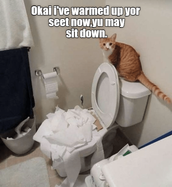 funny cat picture of a cat that unloaded a roll of toilet paper into the toilet, and captioned that now you can sit as it is warmer now for you.