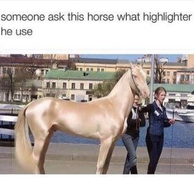 Horse - someone ask this horse what highlighter he use