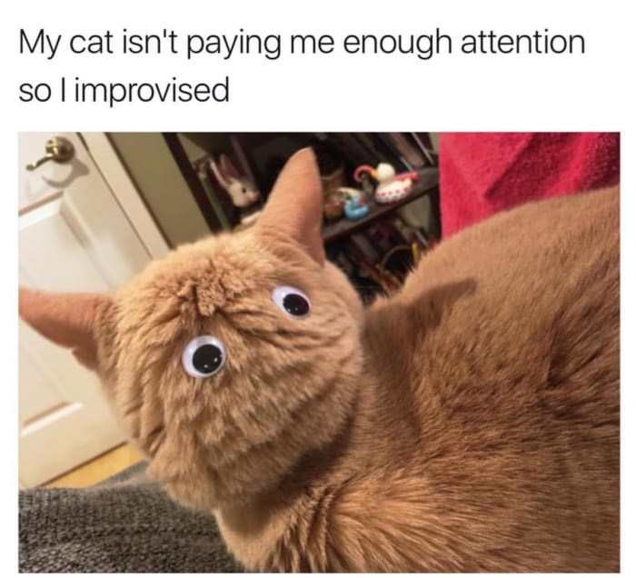 A funny meme of a person who put googly eyes on the back of her cats head to get more time with them.