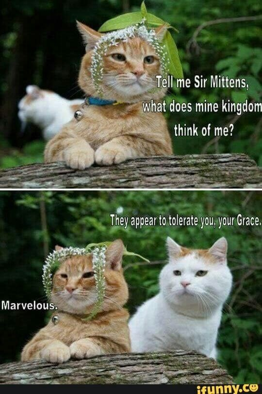 funny meme of a cat asking how his subjects think of him. Answer is they worship him.