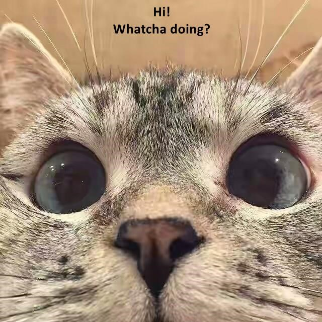 Funny cat meme of a nosy cat asking 'watchu doin' as he butts his face right into your business.
