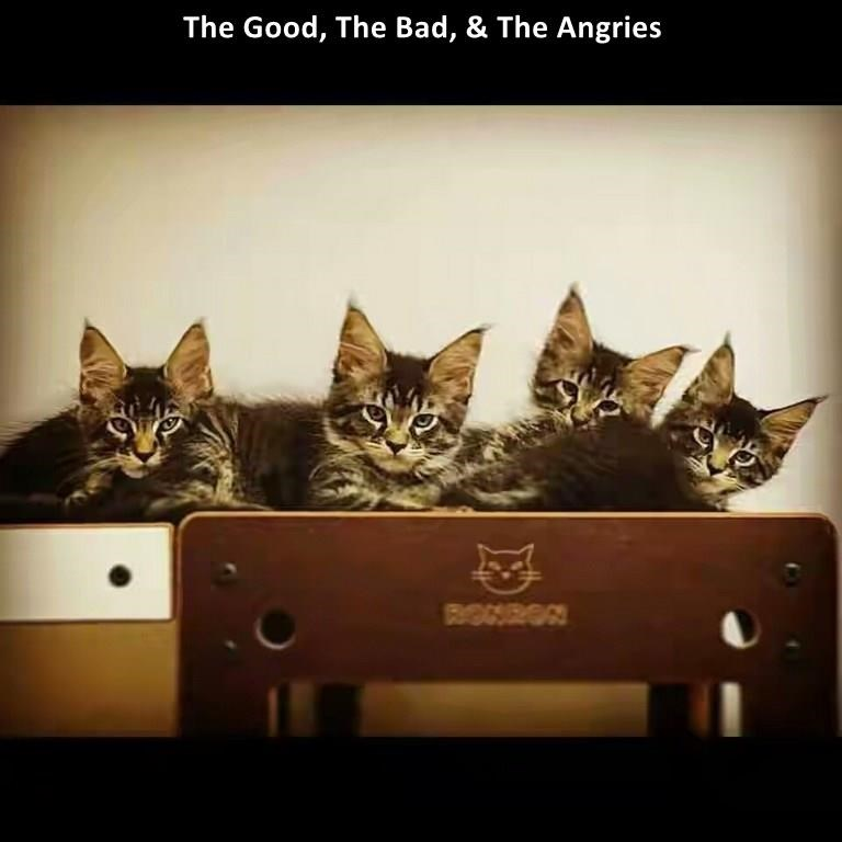 Funny meme of cats labeled as the good, the bad, and the angry.