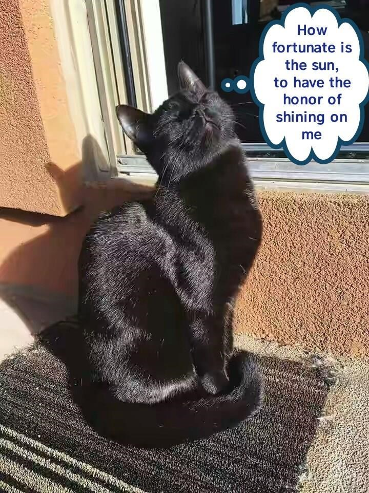 Cat complimenting the sun for having the honor of shining on him.