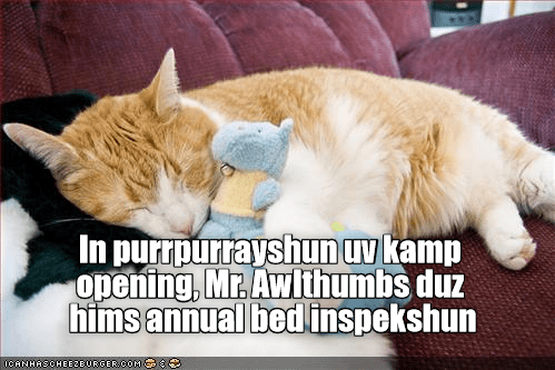Meme of a cat inspecting if his bed is up to par with what needs to be done in order to enjoy a nap there.