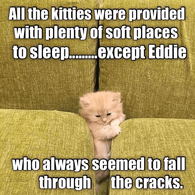 Funny meme of Eddie the cat falling through the cracks.