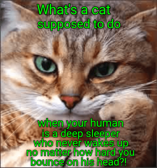 Cat meme about how to wake up your human when he is a deep sleeper.