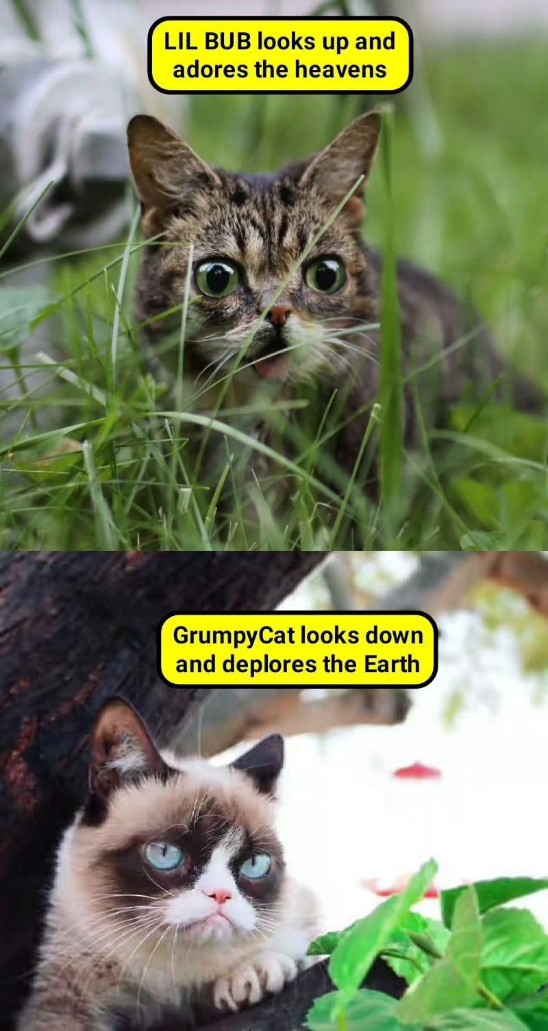 funny meme about how lil bub looks like he loves everything, and Grumpy cat hates everything.