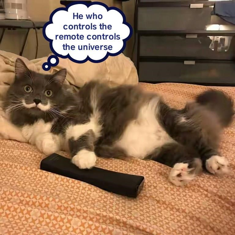 Cat In Control Remote Control