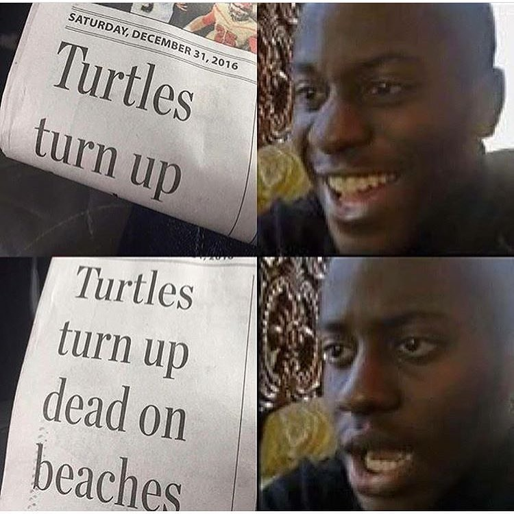 Funny meme about someone opening the paper, gets excited about turtles turning up, then sees full headline about the turtles dying.
