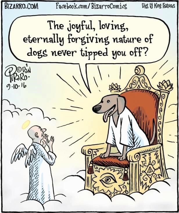 A one picture comic of a man going to heaven and the dog sitting on the decision chair with they answer of didn't you always wonder why we forgave so much?