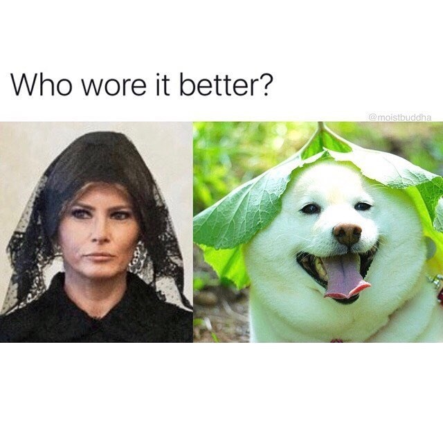 Funny meme of melina trump and a dog - who wore it better?