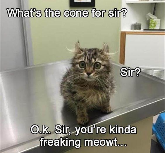 Cat - What's the cone for sir? Sir? O.k. Sir, you're kinda freaking meowt..