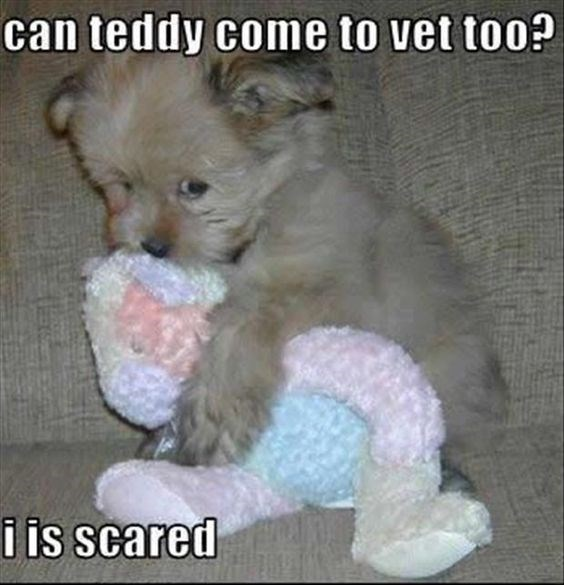 Puppy - can teddy come to vet too? i is scared