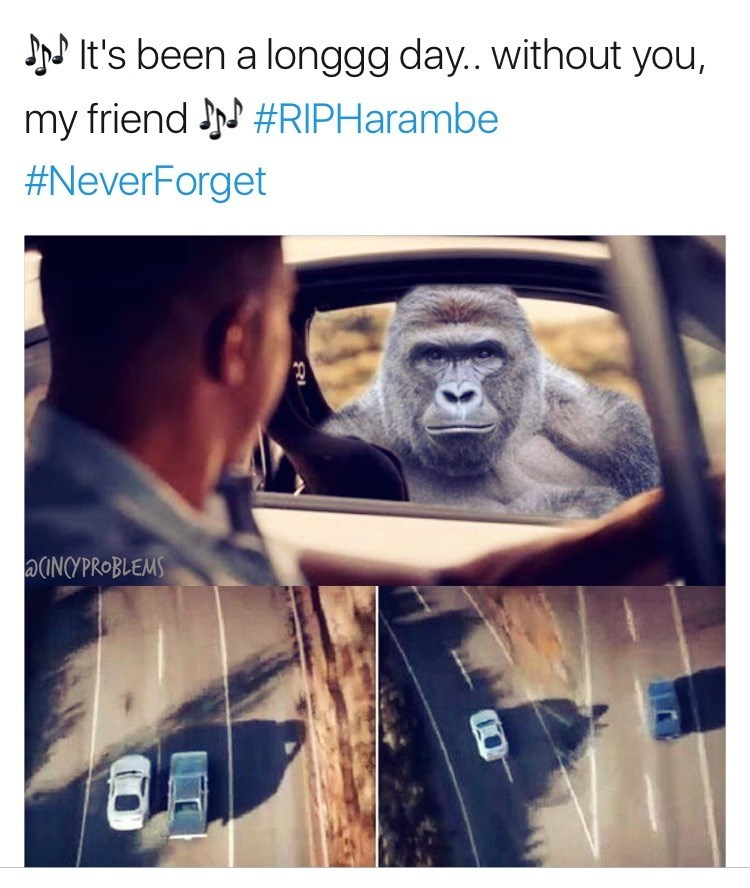 Fast and Furious Harambe Meme for this Tuesday