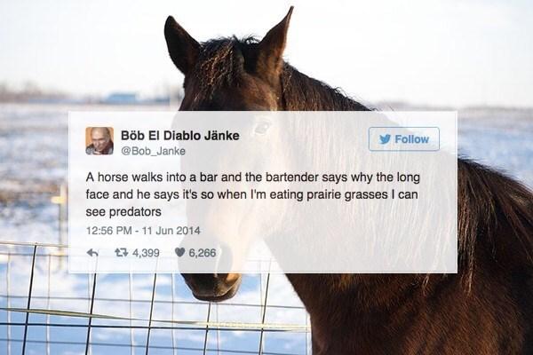 Hair - Böb El Diablo Jänke Follow @Bob_Janke A horse walks into a bar and the bartender says why the long face and he says it's so when I'm eating prairie grasses I can see predators 12:56 PM- 11 Jun 2014 t 4,399 6,266
