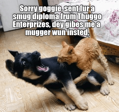 Meme of cat attacking dog