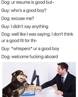 Funny meme about a man interviewing for a position with a dog. In order to get the job the man calls the dog a good boy which leads to him being hired.
