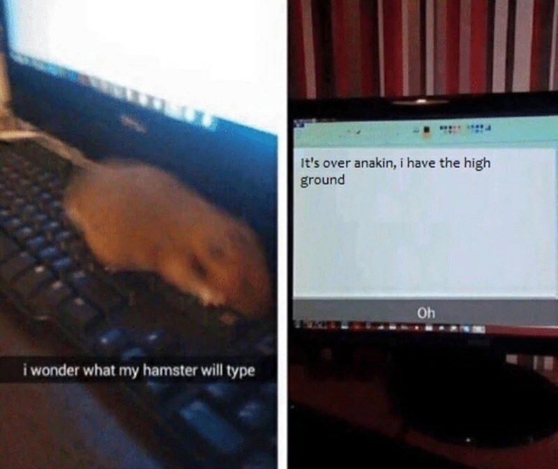 Funny meme where someone wonders what their hamster will type, when we see the text it is a quote from the Star Wars prequels - It's over Anakin, I have the high ground.