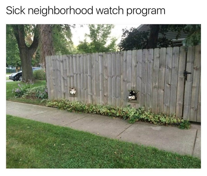 Funny meme about the neighborhood watch - image is of two dogs looking through a fence as if they are in fact watching out for the neighborhood.