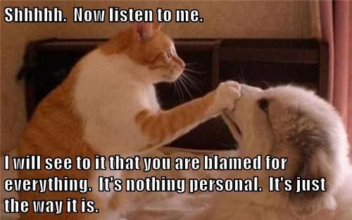 cat meme balance - 9039738880