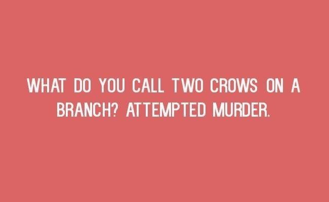 Text - WHAT DO YOU CALL TWO CROWS ON A BRANCH? ATTEMPTED MURDER