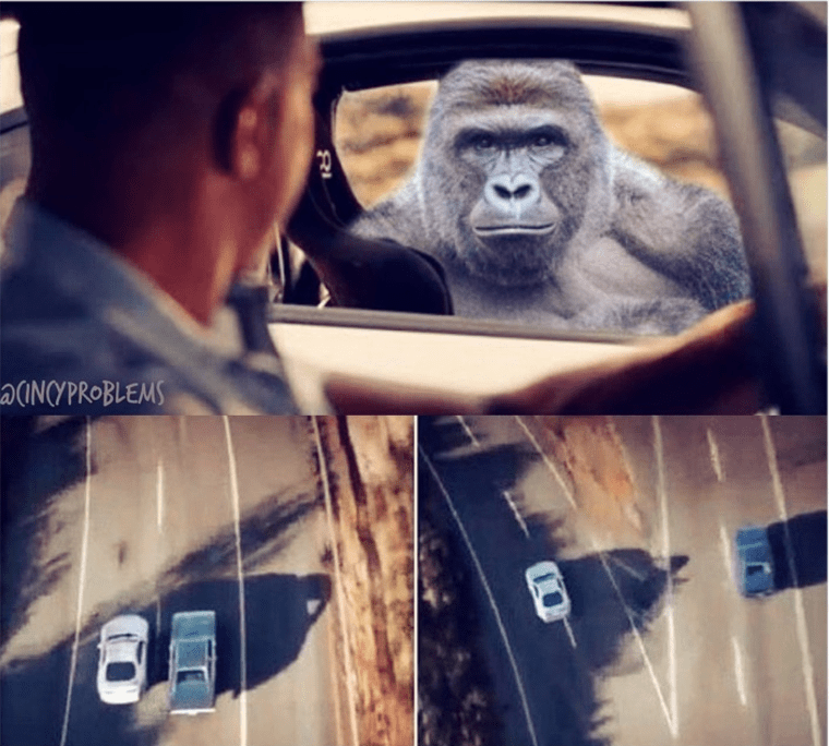picture of remembering Harambe