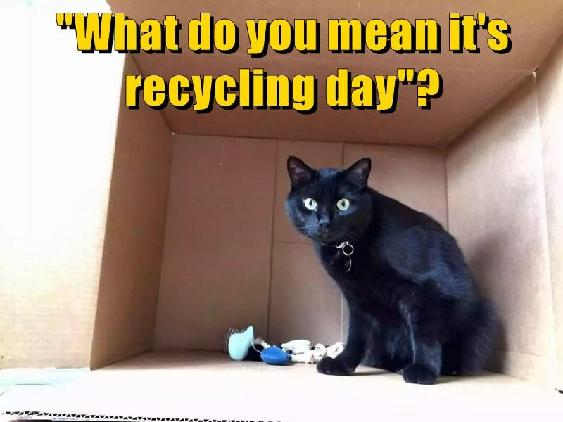 cat is shocked to learn it is recycling day