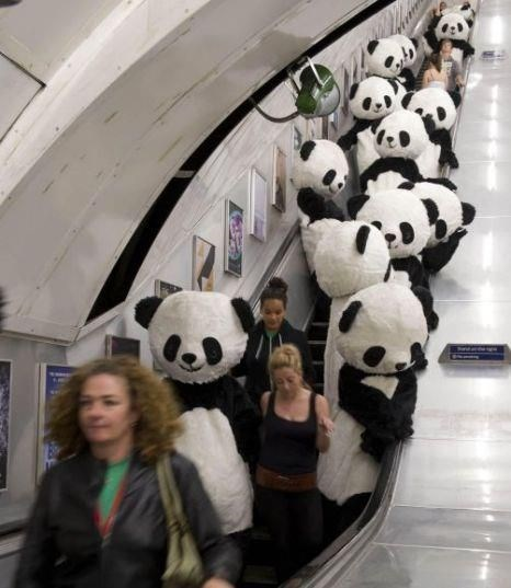 panda bears going up the escalator