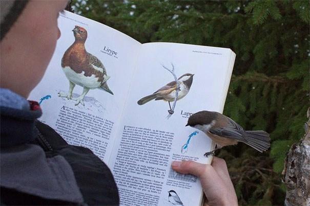 life imitates art - Bird - Lirype Lapp o teaan