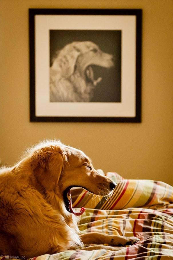 life imitates art - Dog - HlMaguire