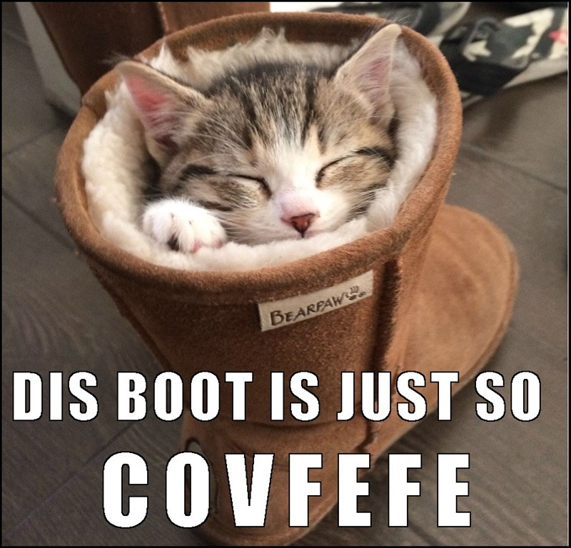 Kitten snuggled up all covfefe in a uggs boot