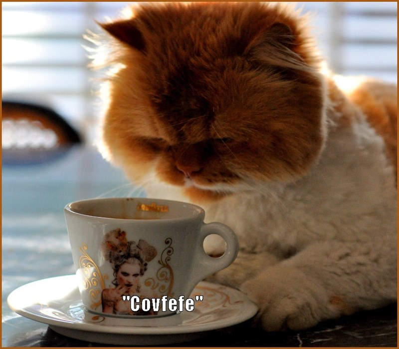 Cat trying to enjoy his morning covfefe