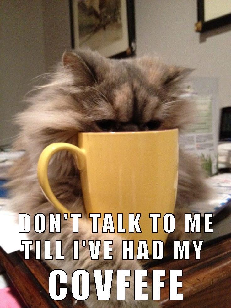 Covfefe addicted cat